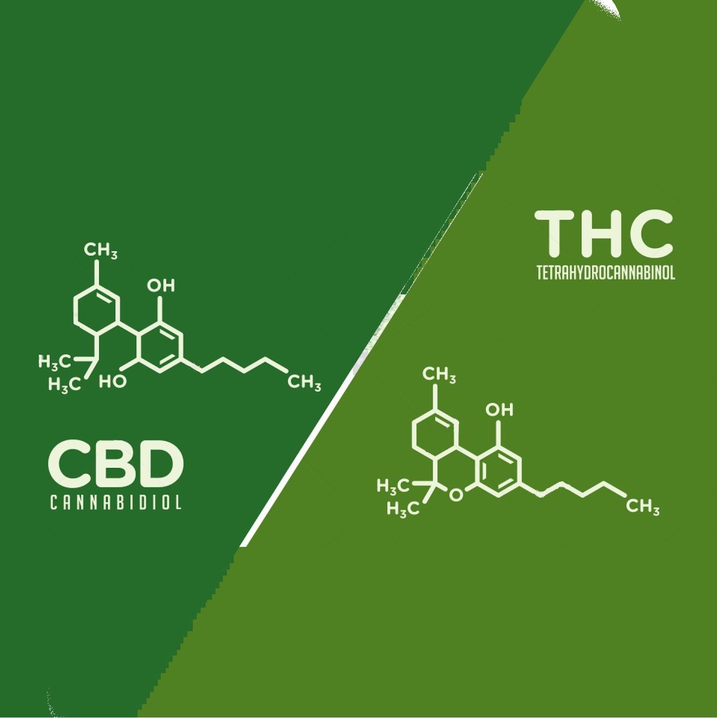 CBD, THC ? Qu'est-ce qui les diffèrent ?