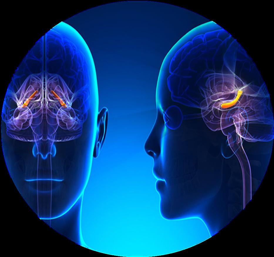 Le CBD et la neurogenèse
